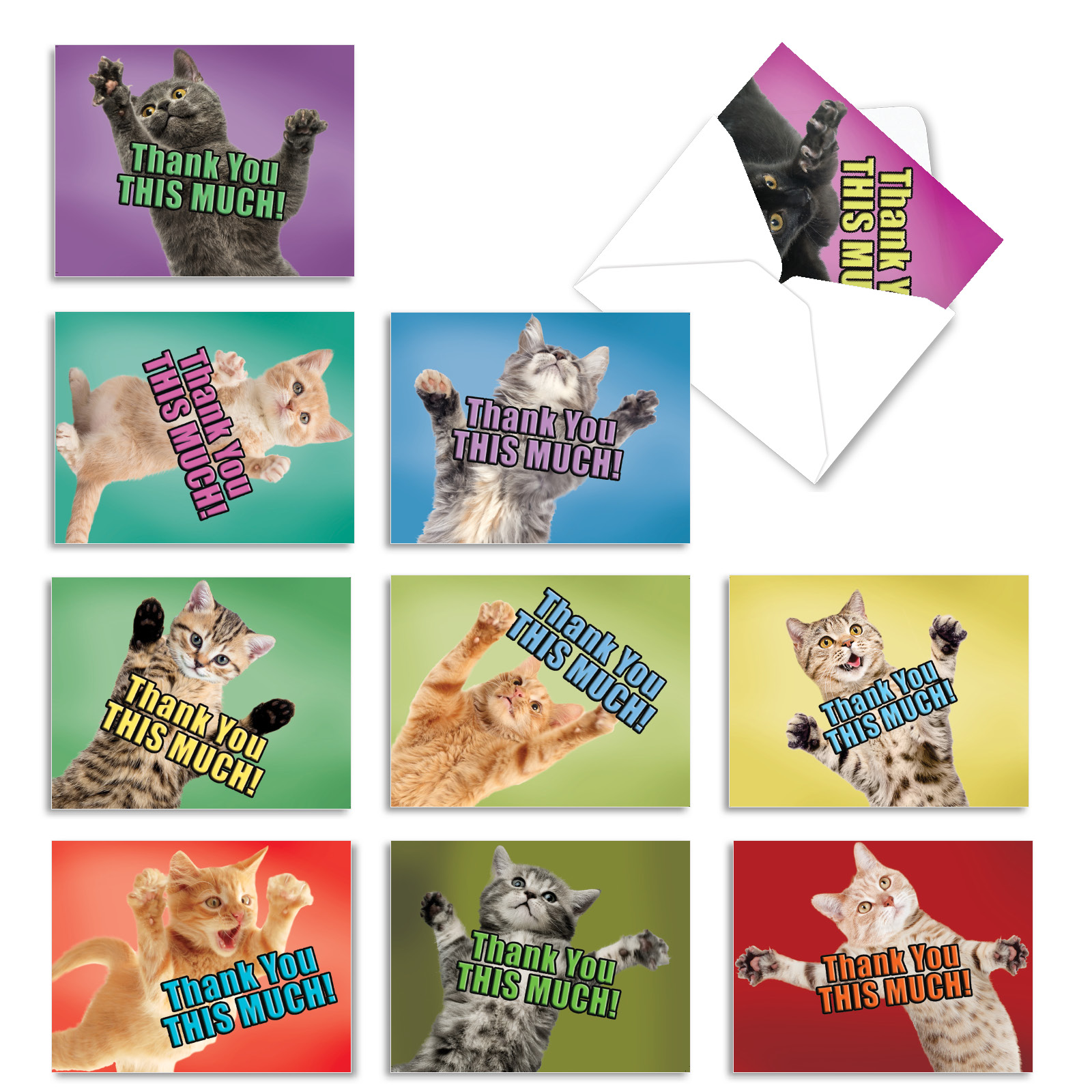 m2368tyg cat big thanks 10 assorted thank you note cards white